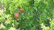 owoce - fotografia